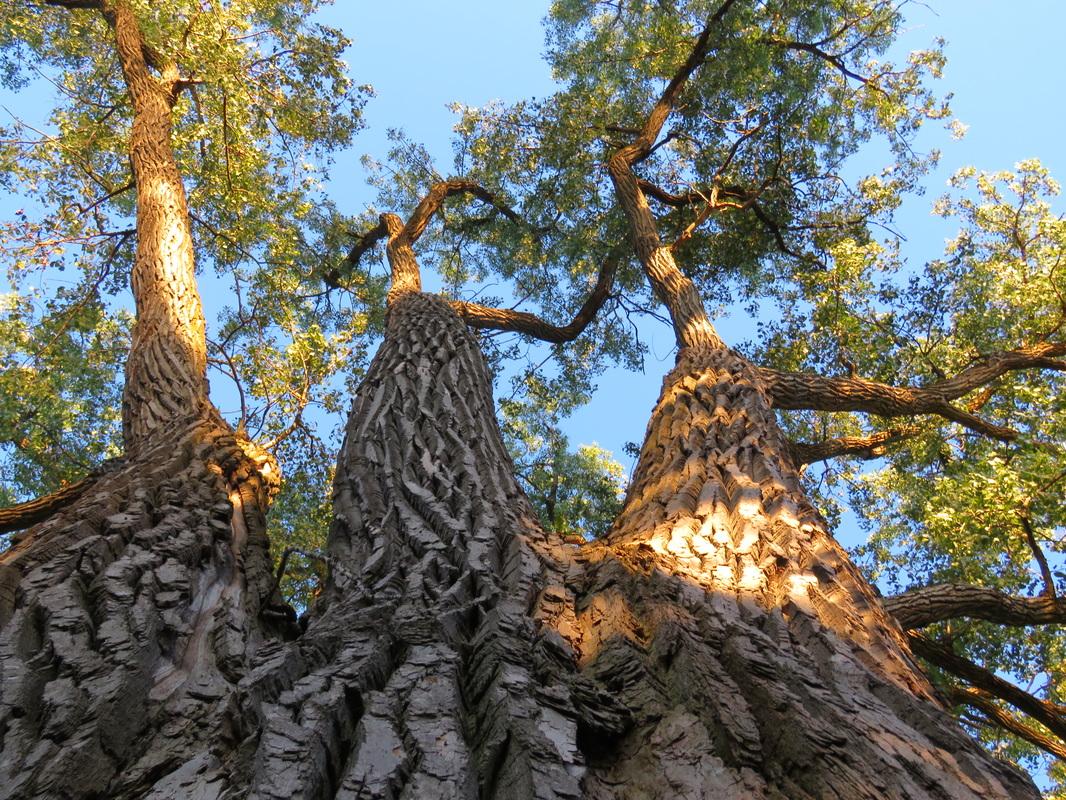 arbre-parc-nicolas-vieil